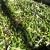 Crisi del settore olivicolo-oleario locale – Il Sindaco De Meo e l'Assessore Maschietto convocano un incontro: Martedì 4 Novembre 2014, ore 18.00 – Sala consiliare