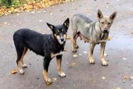 Precisazioni sul servizio di ricovero, mantenimento, custodia e benessere dei cani randagi nel Comune di Fondi