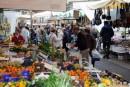 Avviso pubblico assegnazione provvisoria posteggi disponibili al mercato giornaliero di via Gioberti per vendita al dettaglio prodotti alimentari e agricoli
