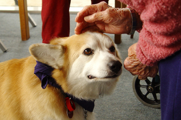 dog_therapy