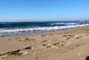Intervento di sanificazione sulle spiagge del litorale: non accedere nelle ore 3.00/7.00 del 20 e 21 Agosto 2015