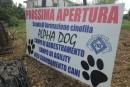Arriva Alpha Dog; grande festa per gli amici a quattro zampe