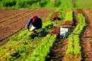 Investire nell'agricoltura: le diverse vie da poter percorrere