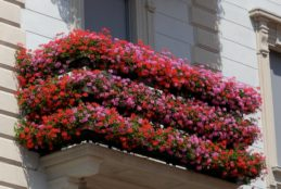 """Istituzione del Concorso """"Balconi fioriti – Città di Fondi 2017"""" per promuovere tra i cittadini l'abbellimento dei balconi con vasi, fiori e piante verdi"""