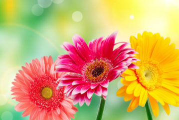 """Esposizione di fiori e piante rare """"Un fior di Castello"""": 31 Marzo / Domenica 2 Aprile 2017"""