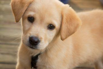 L'Amministrazione pianifica una serie di azioni finalizzate alla sensibilizzazione e responsabilizzazione nel possesso degli animali domestici